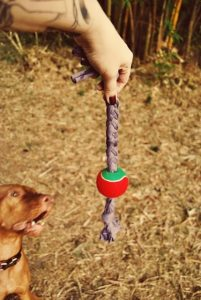 10 Diy Dog Toys Made From Stuff You Already Have
