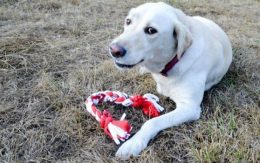DIY Dog Toys, Dog Toy Projects, Make Your Own Dog Toys, How to Make Your Own Dog Toys, Crafts, DIY Crafts, DIY Home, Toys for Pets, How to Make Your Own Toys for Pets, Popular Pin