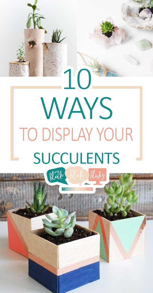 10 Ways to Display Your Succulents  Succulent, Succulent Display, Display Your Succulents, How to Display Your Succulents #DIYHome #Succulents