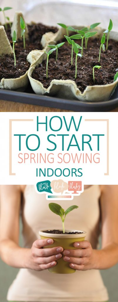 How to Start Spring Sowing Indoors| Spring Gardening, Spring Sowing, How to Sow Seeds Indoors, Indoor Gardening, DIY Gardening, Gardening Tips and Tricks, Gardening 101, Popular Pin #IndoorGardening #Gardening