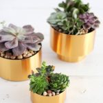 10 Ways to Display Your Succulents| Succulent, Succulent Display, Display Your Succulents, How to Display Your Succulents #DIYHome #Succulents