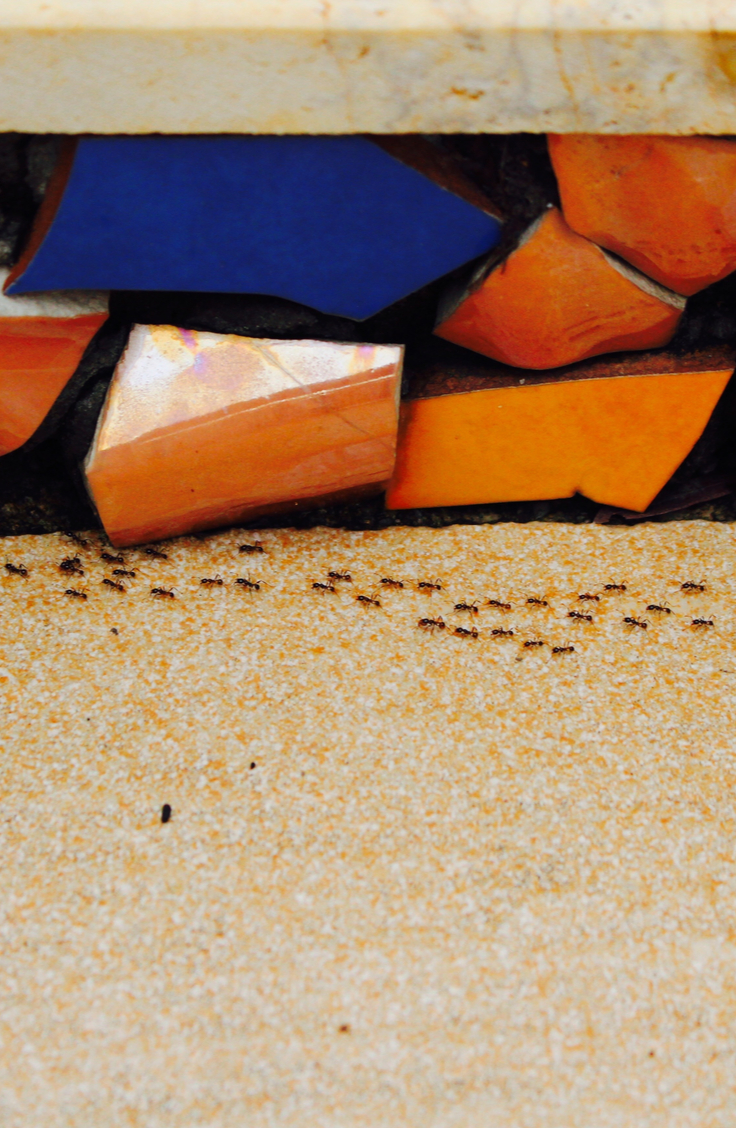 Yuck! Do you have an ant infestation in your home? Though these tiny, resilient bugs may seem impossible to defeat, there are some pretty easy indoor ant repellent ideas to help you chase them out of your home for good. Ants hate the smell of mint. Lay mint tea bags at the their point of entry and they will stay away.