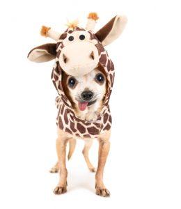 Costume Ideas for Pets   DIY Pet Halloween Costumes   Halloween Costumes for your Pet   Pet-Friendly Halloween Costumes   Halloween