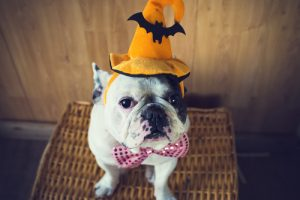 Costume Ideas for Pets | DIY Pet Halloween Costumes | Halloween Costumes for your Pet | Pet-Friendly Halloween Costumes | Halloween