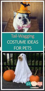 Costume Ideas for Pets | DIY Pet Halloween Costumes | Halloween Costumes for your Pet | Pet-Friendly Halloween Costumes | Halloween