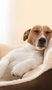your dog | dog | dog treats | dog bowls | dog leash | dog harness | happy dog | puppers | pup