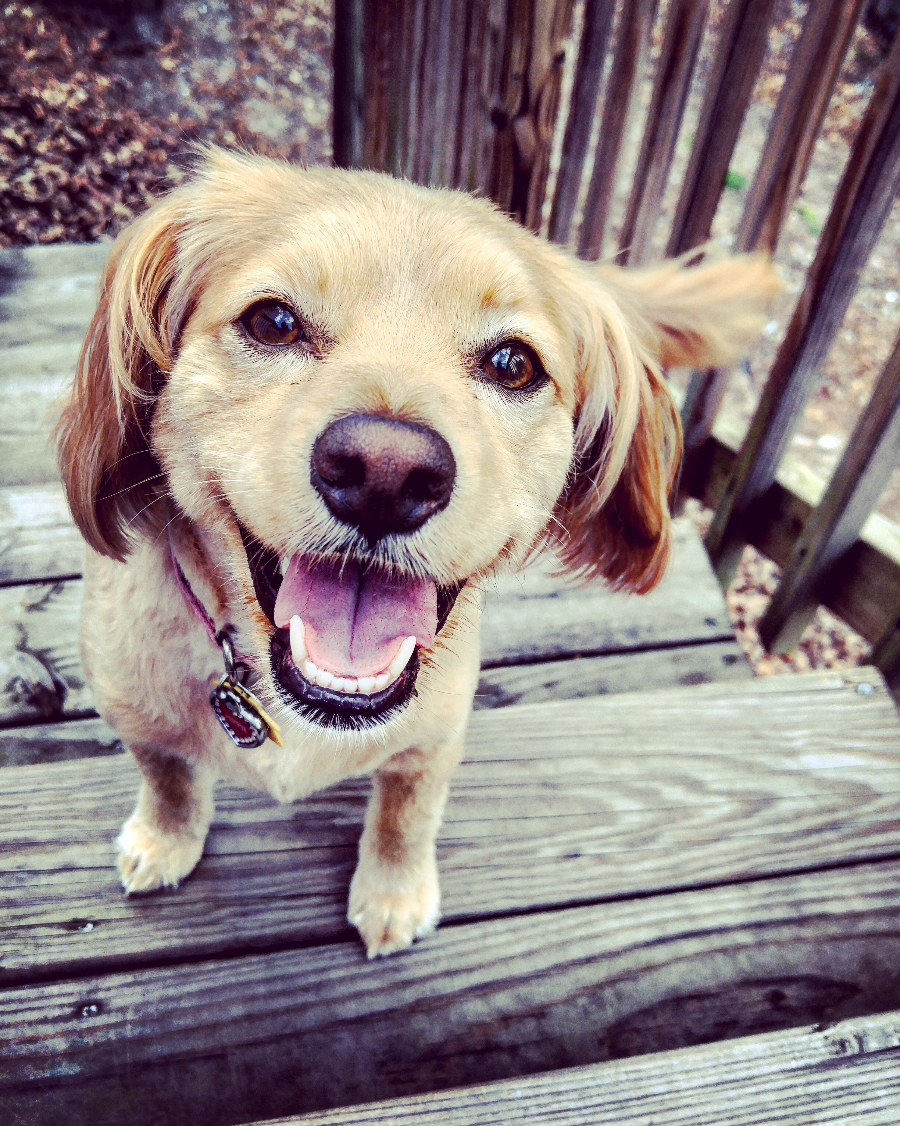 happy | happy dog | happy puppy | how to determine if your dog is happy | dogs | puppy | dog | how to | furry friend | pet owner tips | dog owner tips