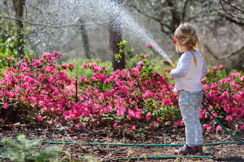summer | summer activities | summer gardening activities | summer gardening activities for kids | activities | gardening | garden