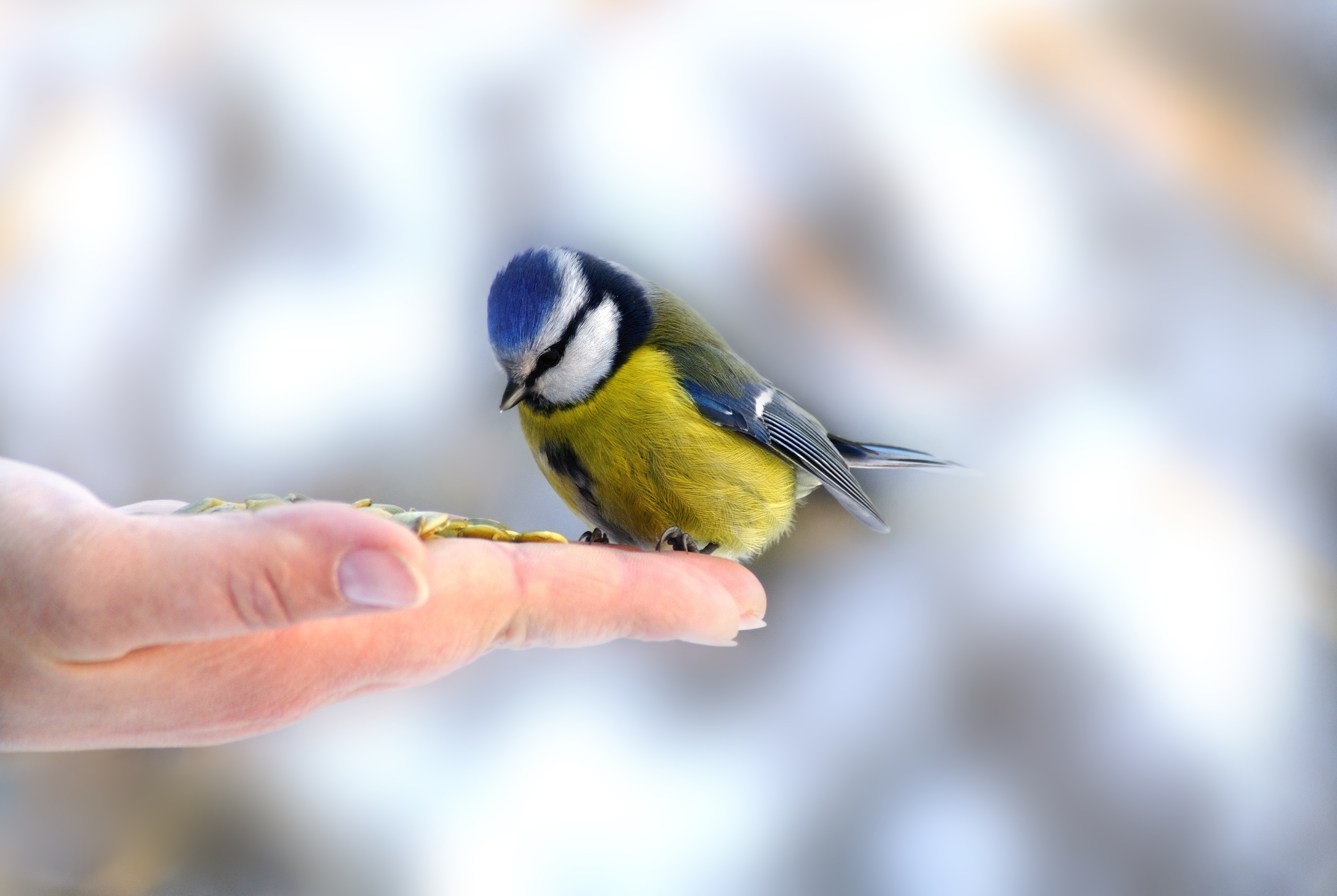 How To Attract Songbirds   how to   garden   backyard   songbirds   birds   how to attract birds   attract birds