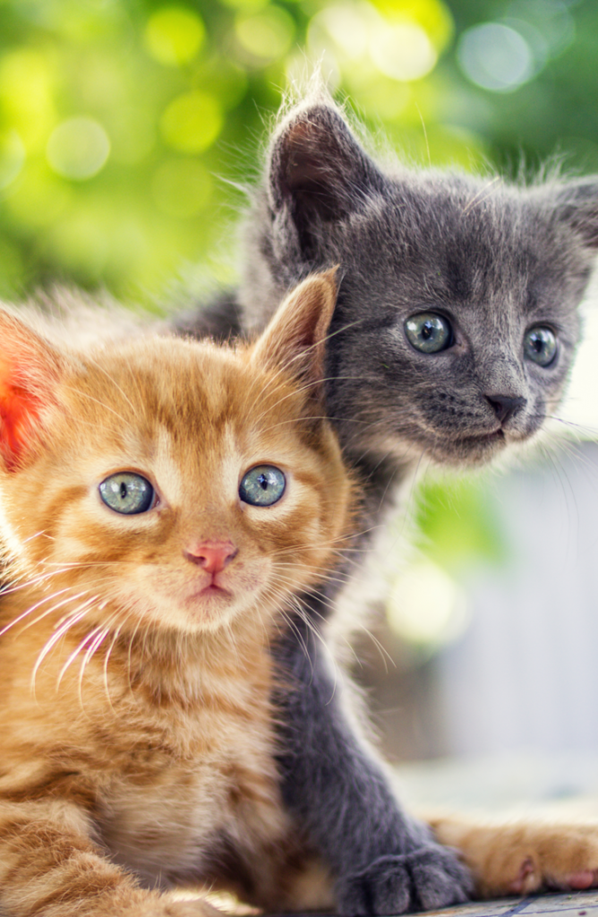Whether you have a boy, a girl, a calico, or are just looking for some cute kitten names, we've got you covered. You can even get two kitties!