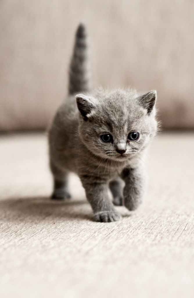 Whether you have a boy, a girl, a calico, or are just looking for some cute kitten names, we've got you covered. Baby kittens are the perfect addition to your family!