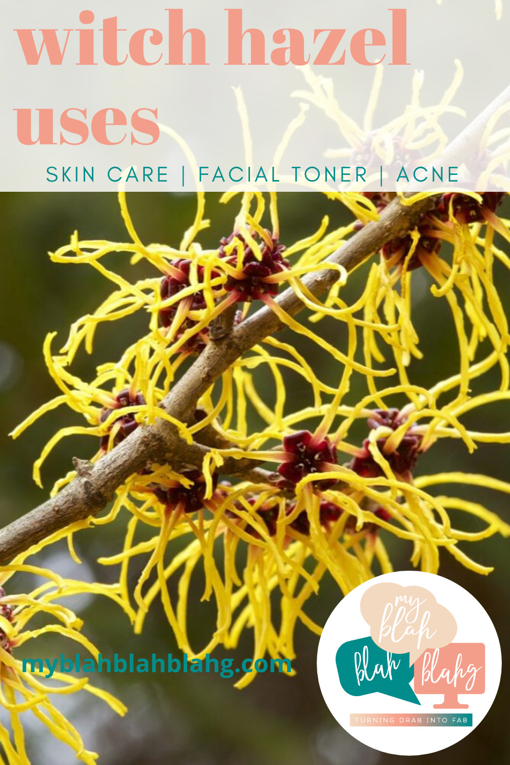 Witch hazel has some seriously amazing uses when it comes to skin care. Whether you have dry, oily, or a combination skin type, you have got to add this to your skin care routine. #witchhazeluses #skincare #myblahblahblahgblog
