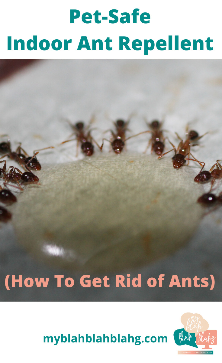 I never invite ants to my house, but every summer they feel a need to visit. And like most guests, they stay too long. Well, no more am I allowing uninvited visitors. Ants included. Learn how I get rid of ants indoors by reading this post. It's quite simple. Don't let your house be invaded. #killantsindoors #ideastokillants #pestcontrolindoors
