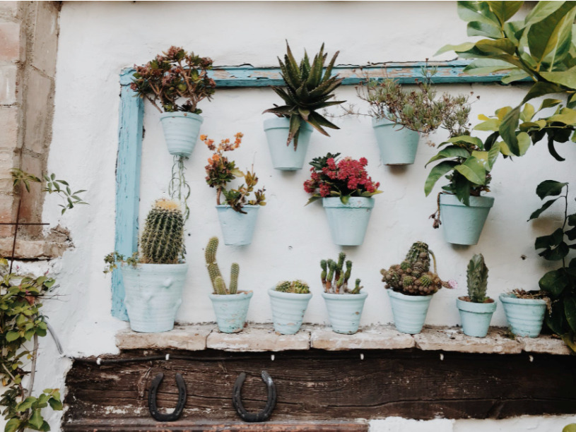 Make your garden look adventurous with these flower pot ideas