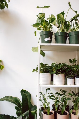 A shelf with small planters